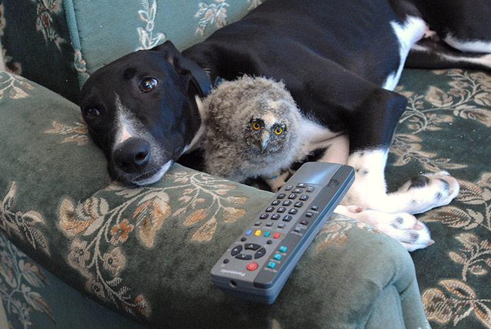 20-Amizades-incomuns-entre-animais-que-são-absolutamente-adoráveis-Blog-Animal (22)