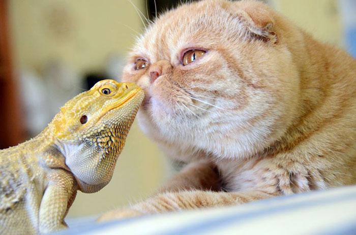 20-Amizades-incomuns-entre-animais-que-são-absolutamente-adoráveis-Blog-Animal (26)