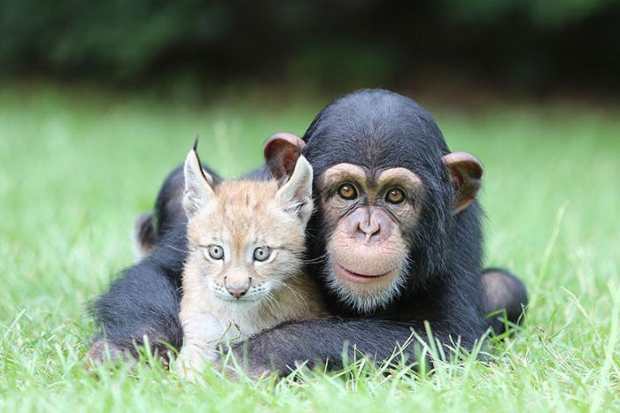 20-Amizades-incomuns-entre-animais-que-são-absolutamente-adoráveis-Blog-Animal (27)