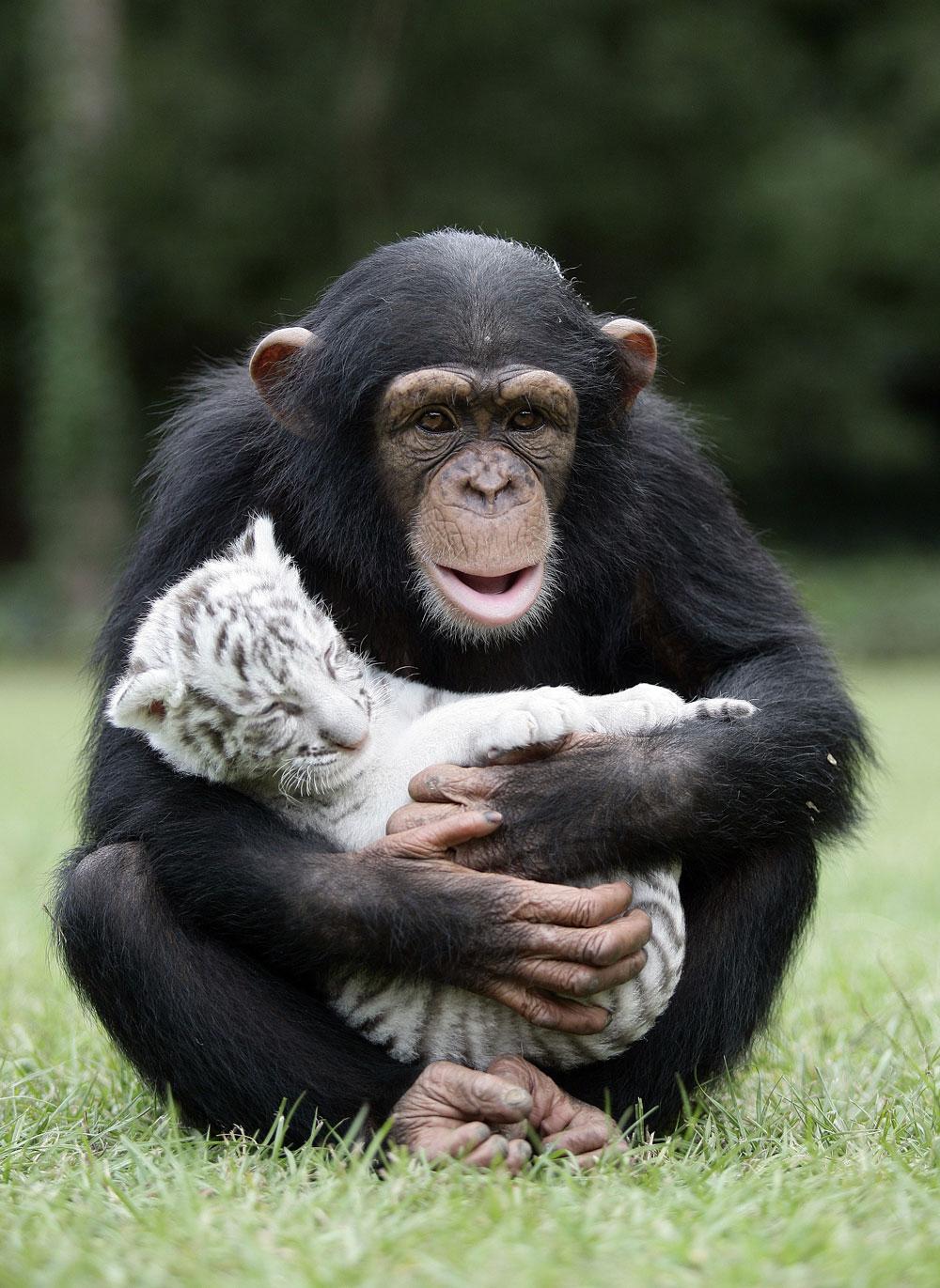 20-Amizades-incomuns-entre-animais-que-são-absolutamente-adoráveis-Blog-Animal (29)