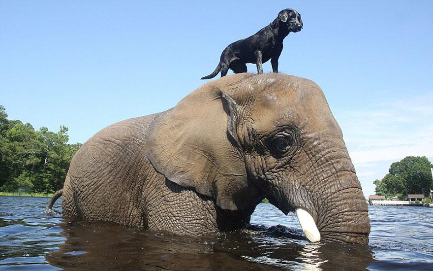 20-Amizades-incomuns-entre-animais-que-são-absolutamente-adoráveis-Blog-Animal (3)