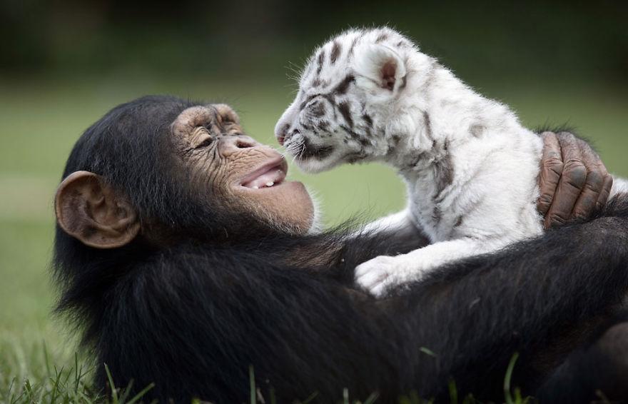 20-Amizades-incomuns-entre-animais-que-são-absolutamente-adoráveis-Blog-Animal (30)