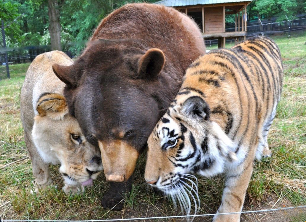 20-Amizades-incomuns-entre-animais-que-são-absolutamente-adoráveis-Blog-Animal (31)