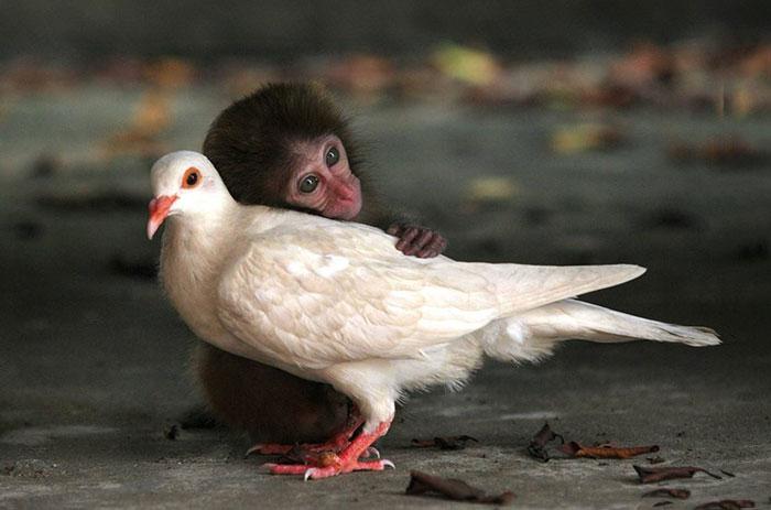 20-Amizades-incomuns-entre-animais-que-são-absolutamente-adoráveis-Blog-Animal (32)