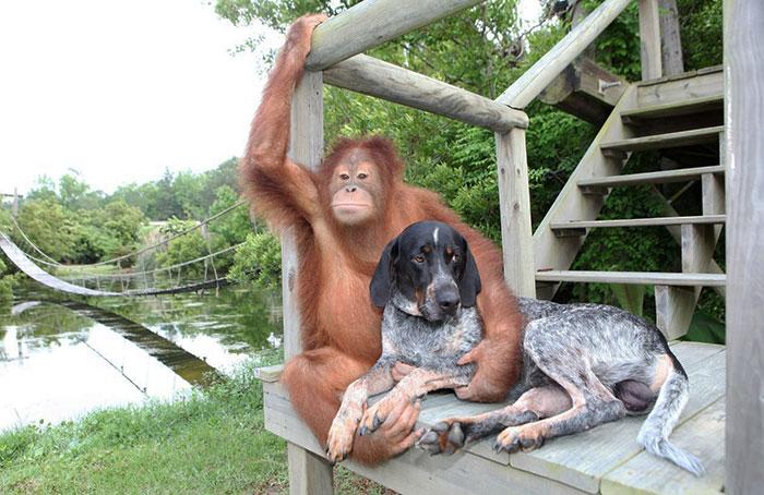 20-Amizades-incomuns-entre-animais-que-são-absolutamente-adoráveis-Blog-Animal (33)