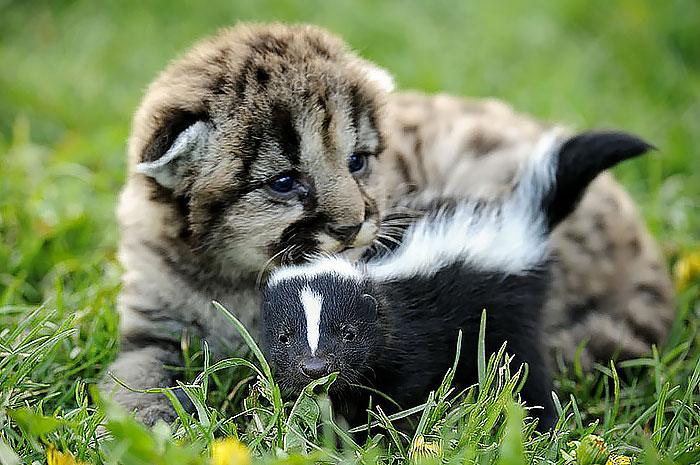 20-Amizades-incomuns-entre-animais-que-são-absolutamente-adoráveis-Blog-Animal (34)