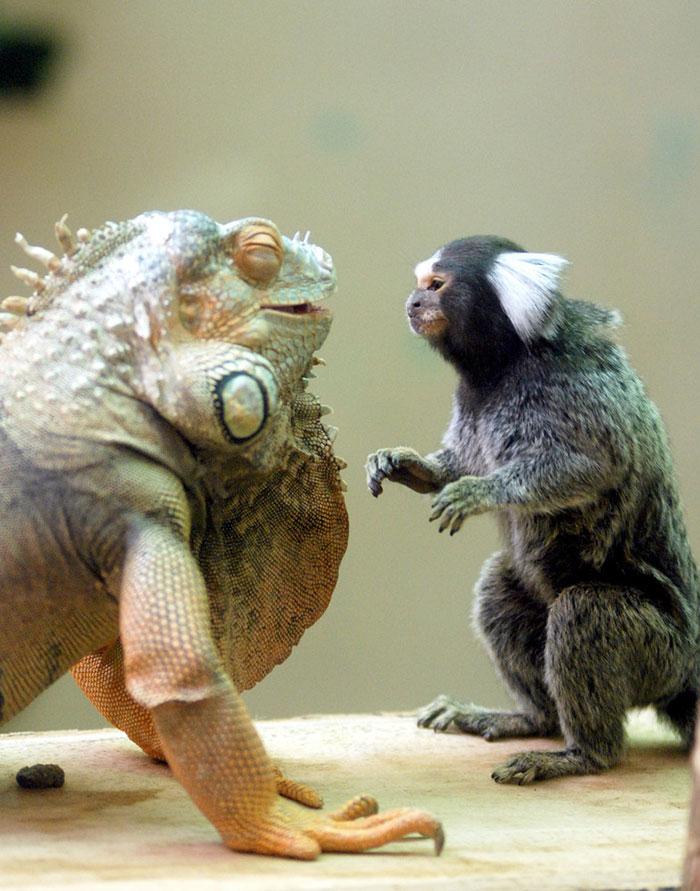 20-Amizades-incomuns-entre-animais-que-são-absolutamente-adoráveis-Blog-Animal (35)