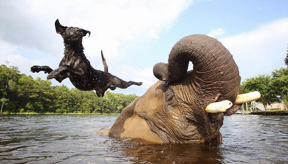20-Amizades-incomuns-entre-animais-que-são-absolutamente-adoráveis-Blog-Animal (4)