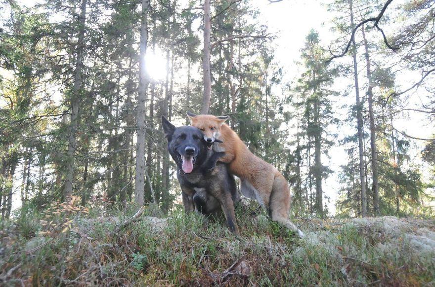 20-Amizades-incomuns-entre-animais-que-são-absolutamente-adoráveis-Blog-Animal (5)