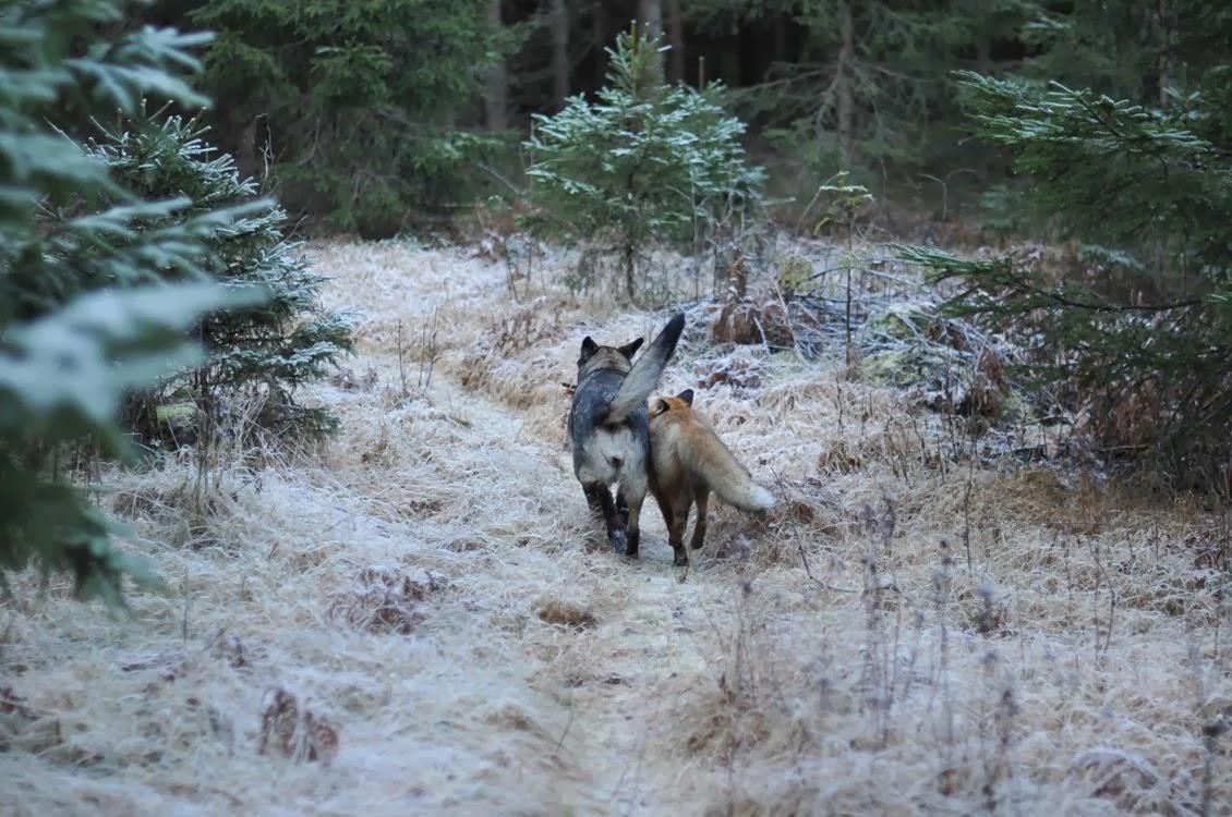 20-Amizades-incomuns-entre-animais-que-são-absolutamente-adoráveis-Blog-Animal (6)