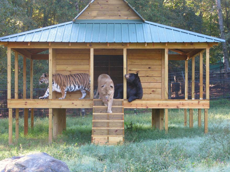 20-Amizades-incomuns-entre-animais-que-são-absolutamente-adoráveis-Blog-Animal (8)