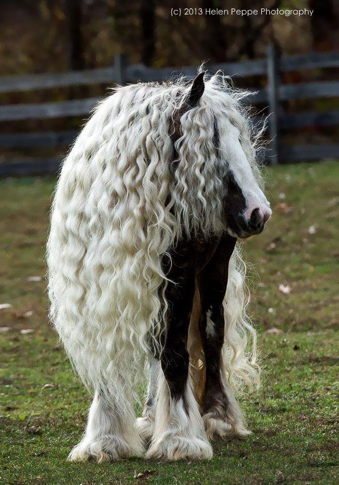 20-Animais-com-seus-longos-e-lindos-pêlos-e-penas-Blog-Animal (12)