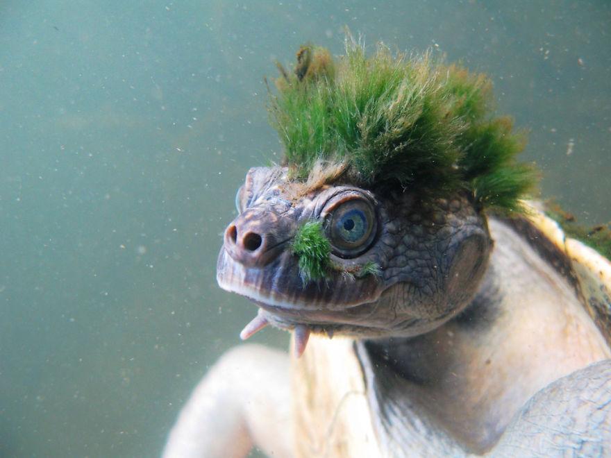 20-Animais-com-seus-longos-e-lindos-pêlos-e-penas-Blog-Animal (13)