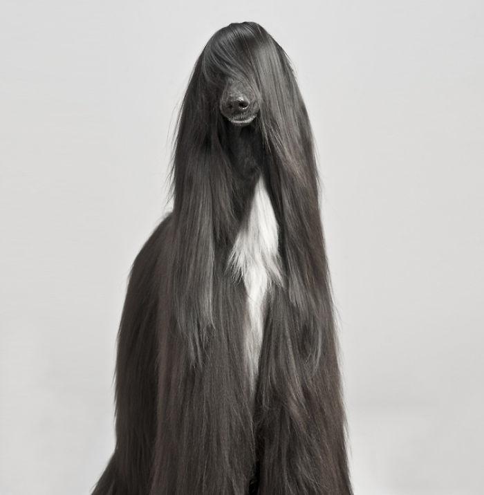 20-Animais-com-seus-longos-e-lindos-pêlos-e-penas-Blog-Animal (16)