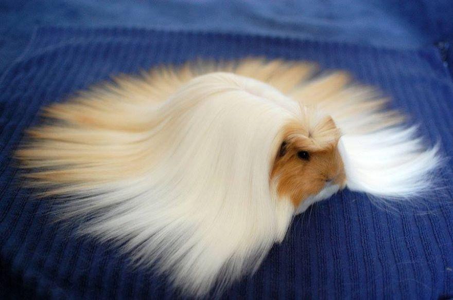 20-Animais-com-seus-longos-e-lindos-pêlos-e-penas-Blog-Animal (21)