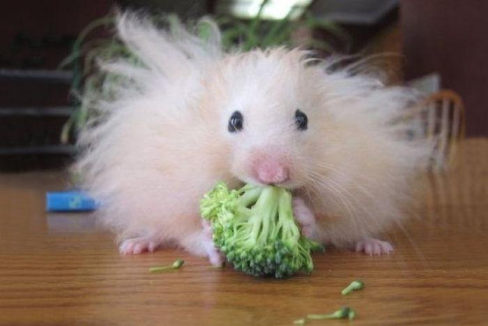 20-Animais-com-seus-longos-e-lindos-pêlos-e-penas-Blog-Animal (3)