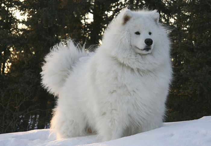 20-Animais-com-seus-longos-e-lindos-pêlos-e-penas-Blog-Animal (6)
