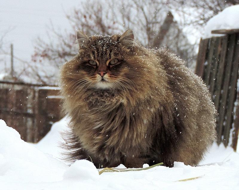 20-Animais-com-seus-longos-e-lindos-pêlos-e-penas-Blog-Animal (8)