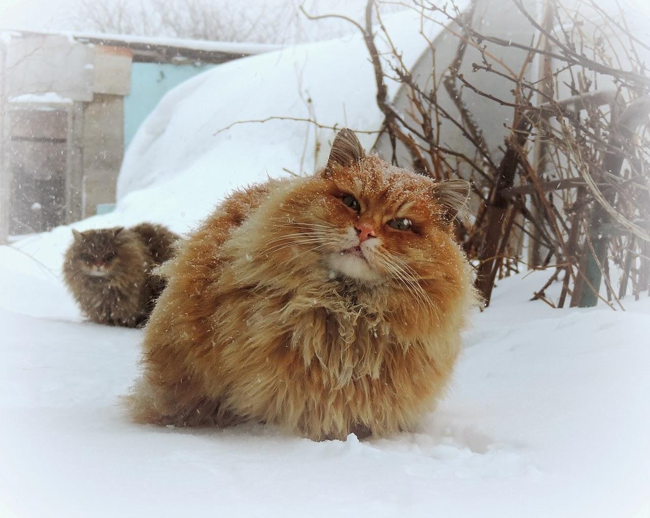 20-Animais-com-seus-longos-e-lindos-pêlos-e-penas-Blog-Animal (9)