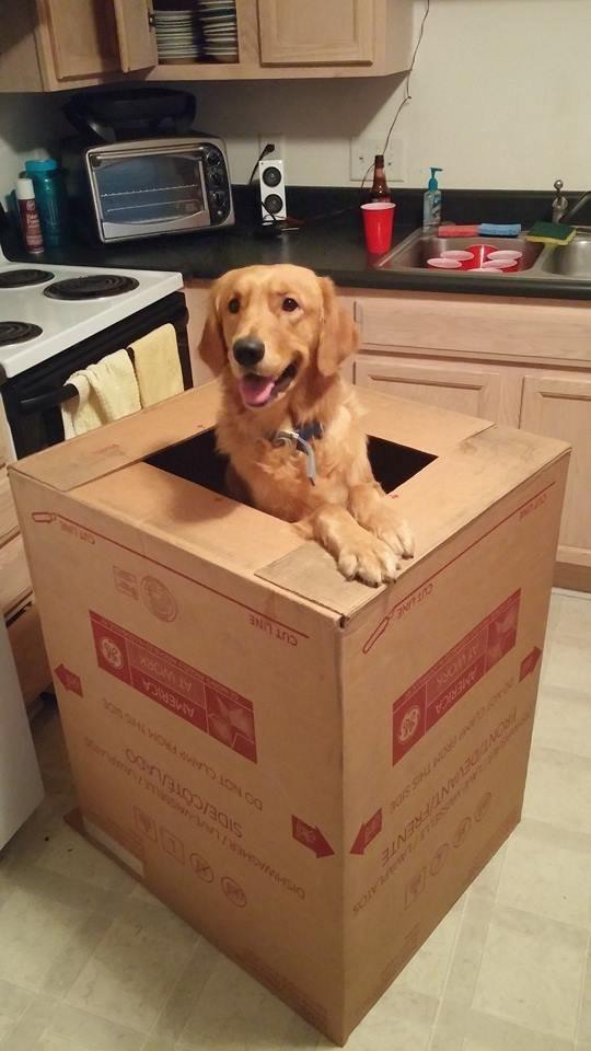 21-Razões-pelos-quais-você-deve-ser-grato-ao-seu-cachorro-Blog-Animal (10)