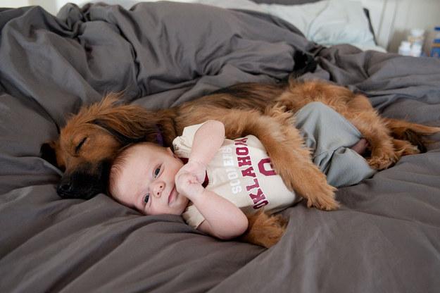21-Razões-pelos-quais-você-deve-ser-grato-ao-seu-cachorro-Blog-Animal (16)