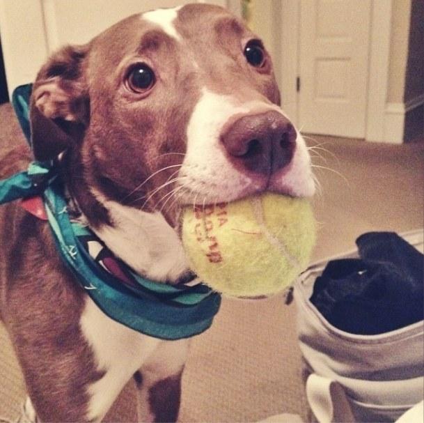 21-Razões-pelos-quais-você-deve-ser-grato-ao-seu-cachorro-Blog-Animal (19)