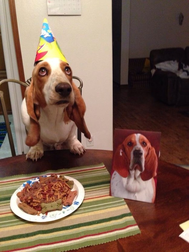 21-Razões-pelos-quais-você-deve-ser-grato-ao-seu-cachorro-Blog-Animal (20)