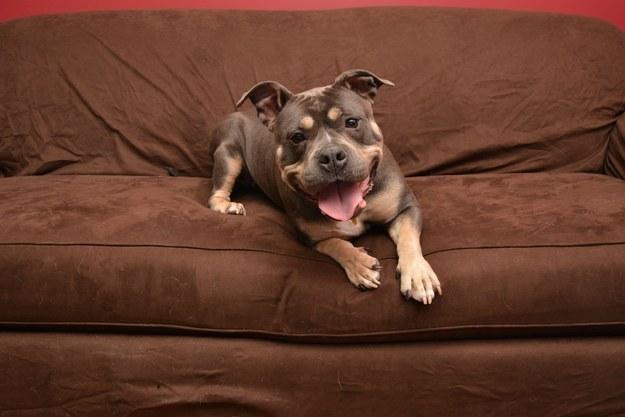 21-Razões-pelos-quais-você-deve-ser-grato-ao-seu-cachorro-Blog-Animal (21)