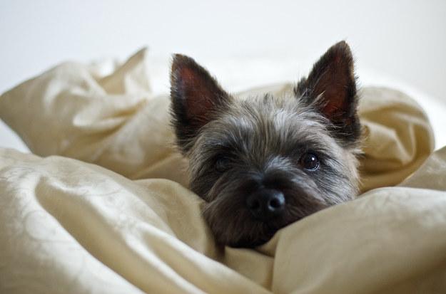 21-Razões-pelos-quais-você-deve-ser-grato-ao-seu-cachorro-Blog-Animal (5)