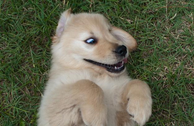 21-Razões-pelos-quais-você-deve-ser-grato-ao-seu-cachorro-Blog-Animal (7)