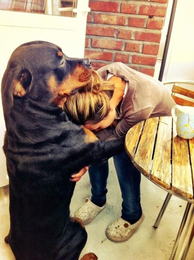 21-Razões-pelos-quais-você-deve-ser-grato-ao-seu-cachorro-Blog-Animal (8)