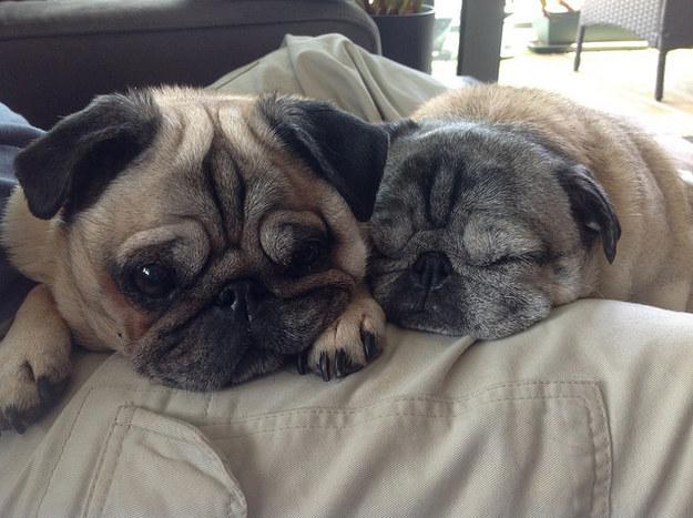 21-Razões-pelos-quais-você-deve-ser-grato-ao-seu-cachorro-Blog-Animal (9)