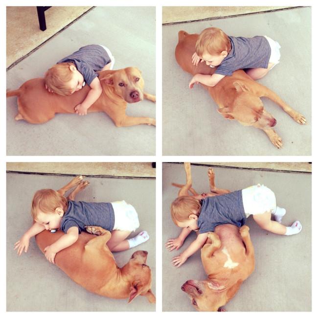 21-imagens-que-provam-que-os-Pit Bulls-também-são-carinhosos-Blog-Animal (1)