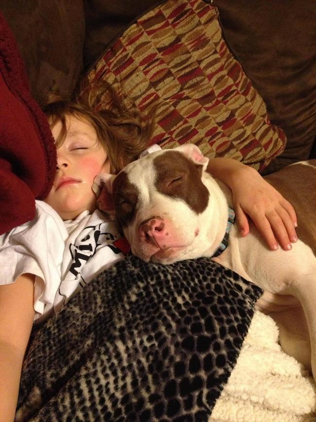21-imagens-que-provam-que-os-Pit Bulls-também-são-carinhosos-Blog-Animal (14)