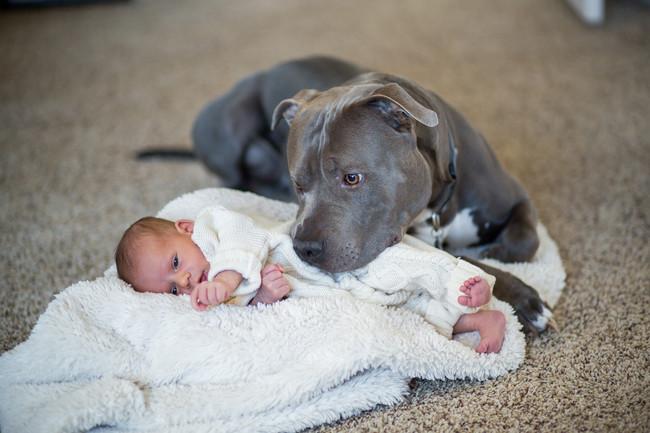 21-imagens-que-provam-que-os-Pit Bulls-também-são-carinhosos-Blog-Animal (2)