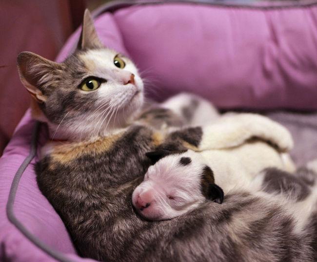 21-imagens-que-provam-que-os-Pit Bulls-também-são-carinhosos-Blog-Animal (6)