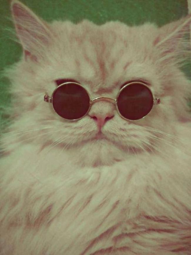 31-Gatos-mais-elegantes-e-estilosos-do-mundo-Blog-Animal (1)