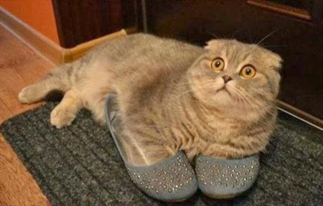 31-Gatos-mais-elegantes-e-estilosos-do-mundo-Blog-Animal (10)