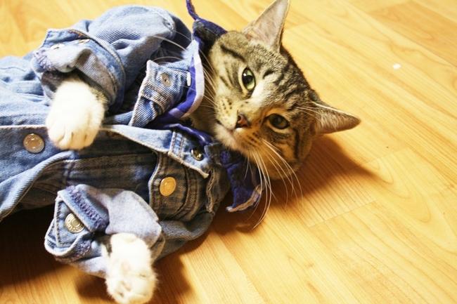 31-Gatos-mais-elegantes-e-estilosos-do-mundo-Blog-Animal (11)