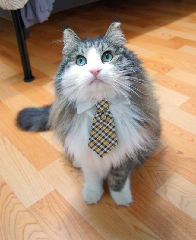 31-Gatos-mais-elegantes-e-estilosos-do-mundo-Blog-Animal (12)