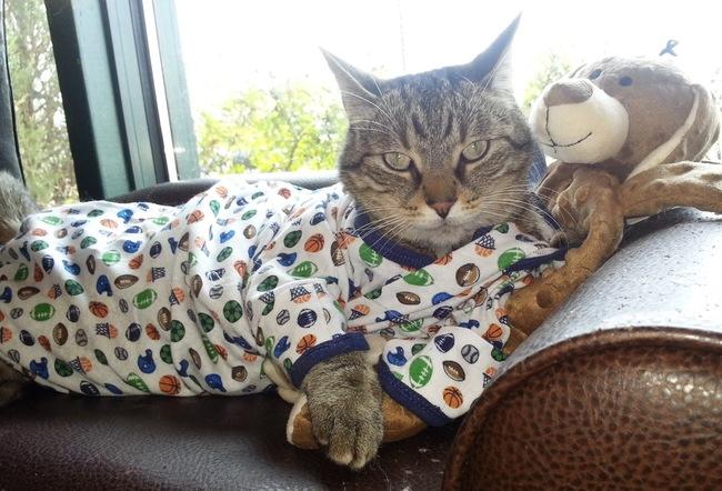 31-Gatos-mais-elegantes-e-estilosos-do-mundo-Blog-Animal (13)