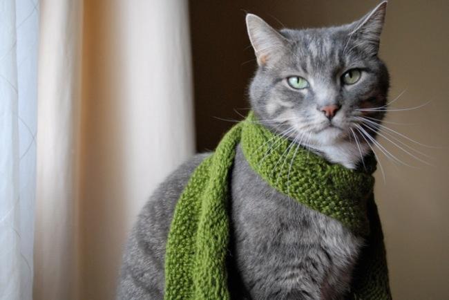 31-Gatos-mais-elegantes-e-estilosos-do-mundo-Blog-Animal (14)