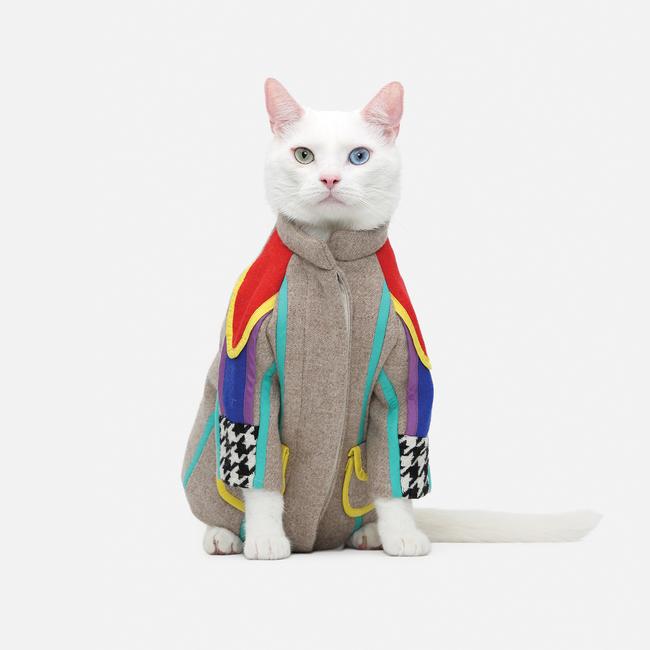 31-Gatos-mais-elegantes-e-estilosos-do-mundo-Blog-Animal (17)