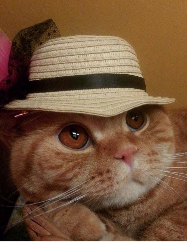 31-Gatos-mais-elegantes-e-estilosos-do-mundo-Blog-Animal (18)