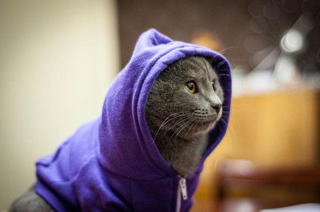 31-Gatos-mais-elegantes-e-estilosos-do-mundo-Blog-Animal (19)