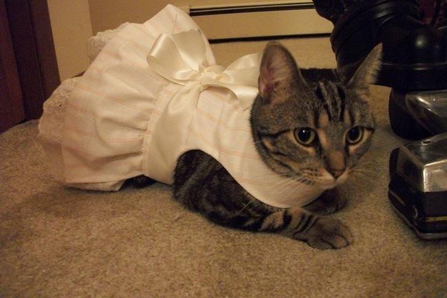 31-Gatos-mais-elegantes-e-estilosos-do-mundo-Blog-Animal (20)