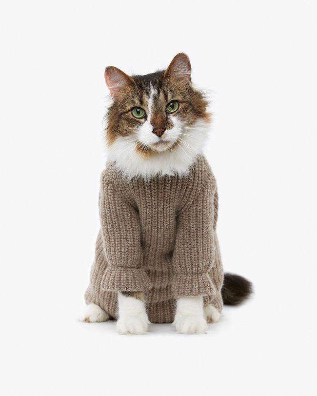 31-Gatos-mais-elegantes-e-estilosos-do-mundo-Blog-Animal (21)