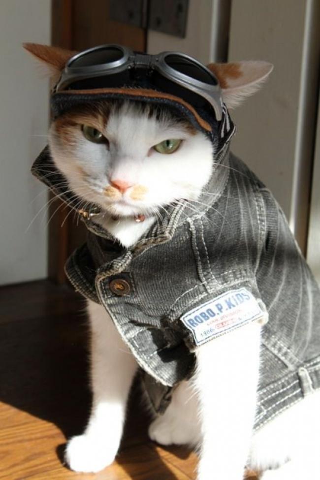 31-Gatos-mais-elegantes-e-estilosos-do-mundo-Blog-Animal (23)