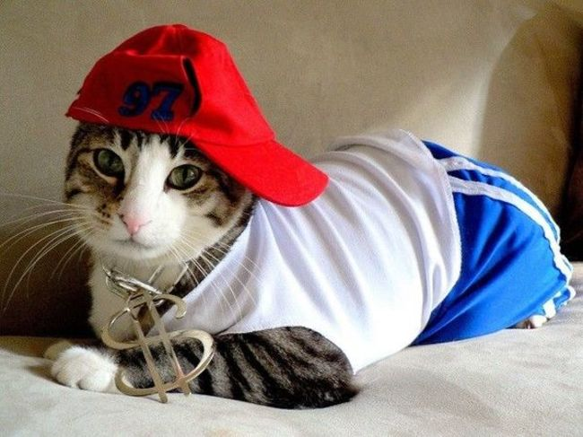 31-Gatos-mais-elegantes-e-estilosos-do-mundo-Blog-Animal (24)