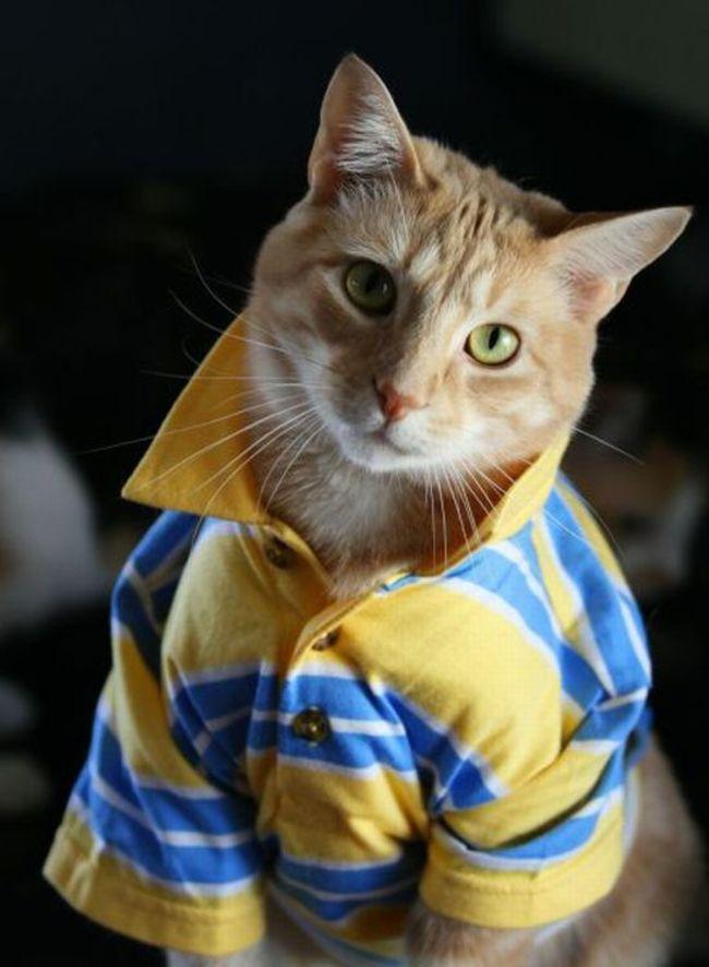 31-Gatos-mais-elegantes-e-estilosos-do-mundo-Blog-Animal (25)